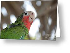 Green And Red Conure With Ruffled Feathers Greeting Card