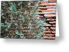 Green And Red - Cypress Branches Over Antique Roman Brick Wall Greeting Card