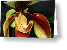 Green And Red Orchid Greeting Card