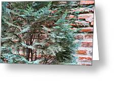 Green And Red - Slender Cypress Branches Over Rough Roman Brick Wall Greeting Card