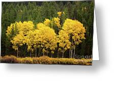 Green And Yellow Greeting Card