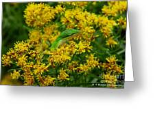 Green Anole Hiding In Golden Rod Greeting Card