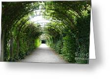 Green Arbor Of Mirabell Garden Greeting Card