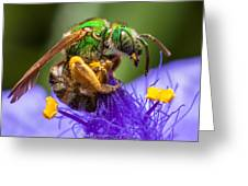 Green Bee Macro Greeting Card