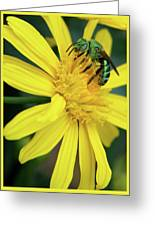 Green Bee On Yellow Daisy Greeting Card