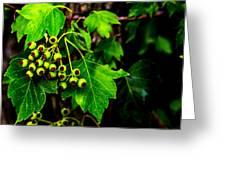 Green Berries Greeting Card