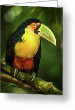 Green-billed Toucan Perched On Branch In Jungle Greeting Card