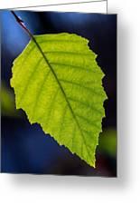 Green Beech Leaf 1 Greeting Card