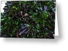 Green-black Cucculent Plant. Big Bush Greeting Card