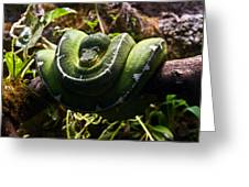 Green Boa Greeting Card