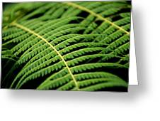 Green Bracken Greeting Card