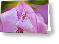 Green Bug On Rose Petal Greeting Card