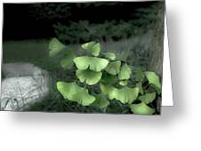 Green Butterflies  Greeting Card