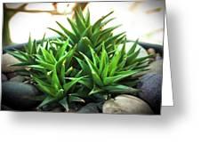 Green Cactus Greeting Card