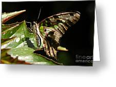 Green Checkered Skipper Greeting Card