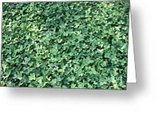 Green Clovers Greeting Card