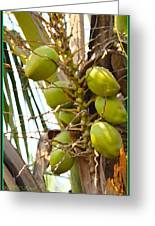 Green Coconut Greeting Card