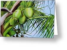 Green Coconuts-02 Greeting Card