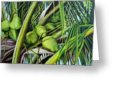 Green Coconuts- 03 Greeting Card