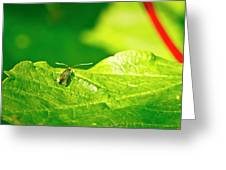 Green Creature On A Broad Leaf. Greeting Card