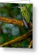 Green-crowned Brilliant Hummingbird Greeting Card