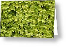 Green Curtain Greeting Card