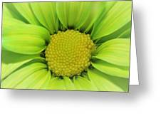 Green Daisy Photograph Greeting Card