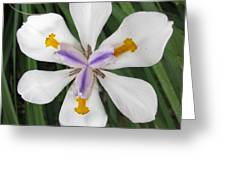 Green Door 30 Greeting Card