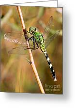 Green Dragonfly Closeup Greeting Card