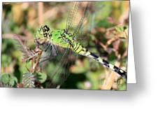 Green Dragonfly Macro Greeting Card