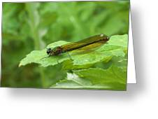 Green Dragonfly On Leaf Greeting Card
