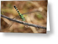 Green Dragonfly On Twig Greeting Card