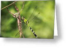 Green Dream Greeting Card