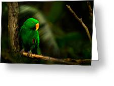 Green Eclectus Parrot Male Greeting Card