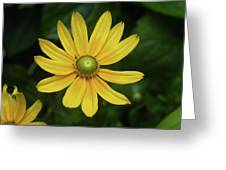 Green Eyed Daisy Greeting Card