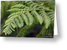 Green Fern Greeting Card