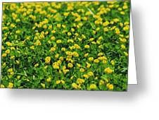 Green Field Of Yellow Flowers 1 Greeting Card
