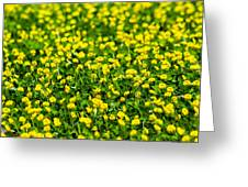 Green Field Of Yellow Flowers 2 1 Greeting Card