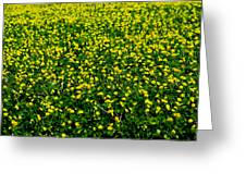 Green Field Of Yellow Flowers 3 Greeting Card