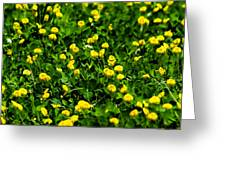 Green Field Of Yellow Flowers 4 Greeting Card