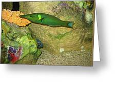Green Fish Greeting Card
