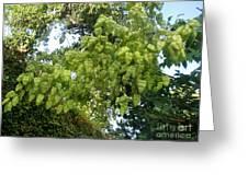 Green Fizalis Plant Greeting Card