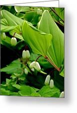 Green Foliage Canopy   Greeting Card