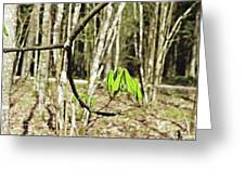 Green Foliage Forest Greeting Card