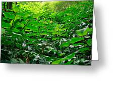Green Foliage Greeting Card