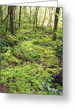 Green Foliage On The Forest Floor Greeting Card