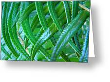 Green Forest Fern Fronds Art Prints Baslee Troutman Greeting Card