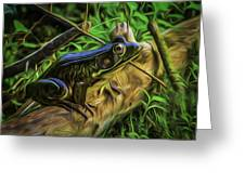 Green Frog On A Brown Log Greeting Card