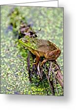 Green Frog On Log Greeting Card