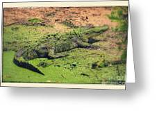 Green Gator With Border Greeting Card